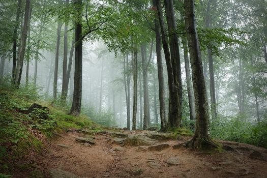 whispers of the forest II by JoannaRzeznikowska