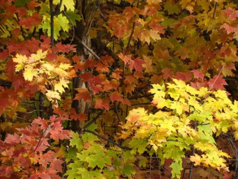 October Leaves by Graphitation