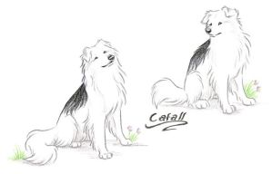 Cafall, Bran's Dog by WildSpiritWolf