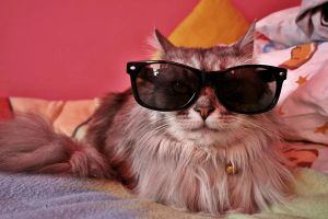 my cat wears sunglasess by super-kate