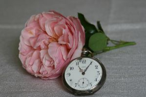 clock and rose stock by Nexu4
