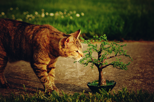 Cat and beaded tree by beads-poet