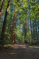 Muir Woods Trail - Exclusive HDR Stock by somadjinn