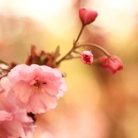 blooming tree by indojo
