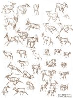 Caribou sketches by LCibos