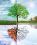 4 seasons tree by TheAngelsFace