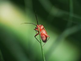Red bug on thin fennel leaf by duggiehoo