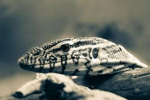 Monitor Lizard by EnphaseMedia