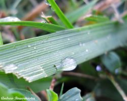Wet Grass by Andrew-Bowermaster