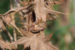 Autumnal stink bug camouflage by marble911