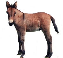 Foal PNG stock by lubman