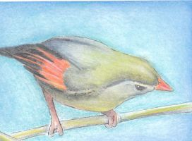Bird ACEO by WitchZilla