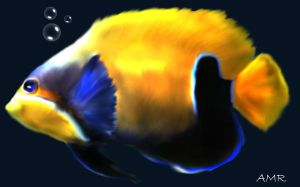 yellow fish by amrix11