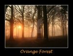 Orange forest by Haati-and-Mousa
