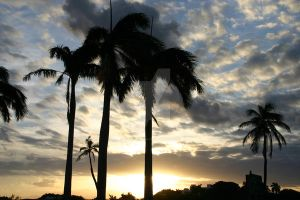 South Beach Sunset Palms by curlyroller