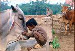 Children and Animals.... by Indiangal