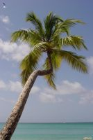 A Lonely Palm Tree by Lior-Art