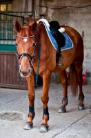My lovely fat horse by SilviasDesires
