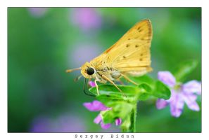 Butterfly. by sergey1984