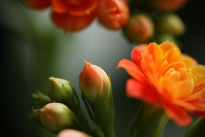 Floral Wonders by Surreal-Photographic