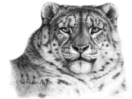 Snow Leopard Portrait G078 by sschukina