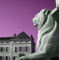 Lion by MaximePerrin