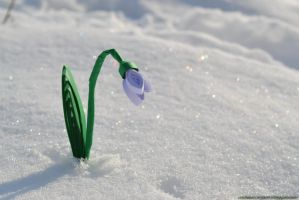 Snowdrop by cridiana