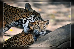 Aww Mom 3963 by mgroberts