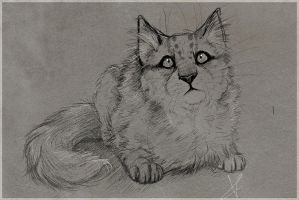 le cat drawing. NOSTALGIA BONER. by Onalew