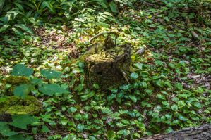 The Stump by aydonis
