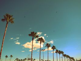 california by karcher-photography