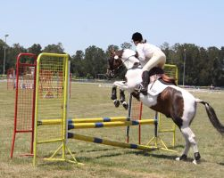STOCK Showjumping 415 by aussiegal7