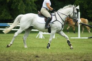 Eventing Horse Show Stock 5 by almondjoyy5