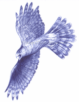 Biro Hawk by MitheaLaval