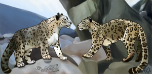 Snow Leopard Love-Valentine 09 by unistar2000