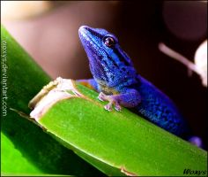 The blue jewel by woxys