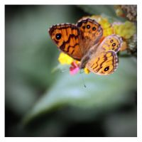 Wall Brown by Garelito-Photos