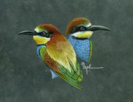 European Bee-Eaters by wyldwoman