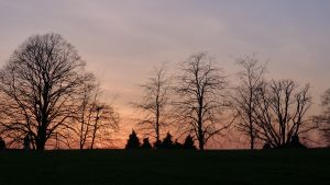 sunset and trees by elliemoo