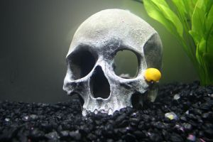 Snail and Skull by DonLeo85