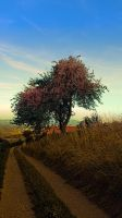 Hiking trail, tree and summer morning by patrickjobst