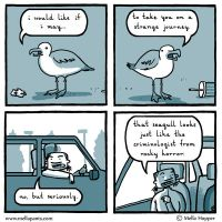 Seagull Impressions by mellapants