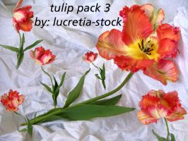 tulip stock pack 003 by lucretia-stock