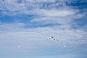 Flying gulls 3 by joannastar-stock