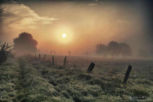 Golden Glimmer in the Morning Fog by SBraeuer