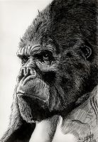 The Mighty Kong by PaulSpatola