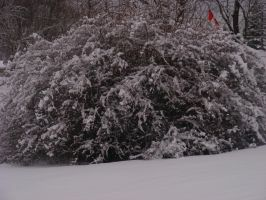 snow covered bush by BlueIvyViolet