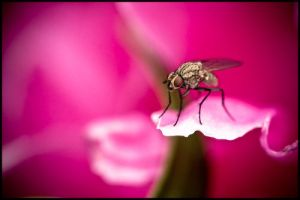 Fly on Pink 2 by Tonicwind