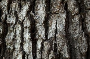 Bark by stock-pics-textures