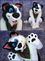 Brinkley Collie by jillcostumes